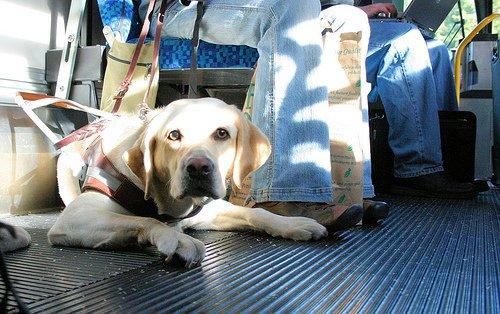 dog-on-bus